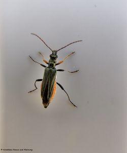 Käfer In Kroatien Kroatiens Fauna Und Flora